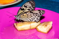 Butterfly Papilio, Stock Images