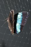 Butterfly Papilio, Stock Photos