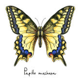 Butterfly Papillo Machaon. Watercolor imitation. Stock Photos