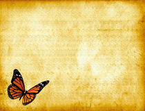 Butterfly on Parchment Royalty Free Stock Photos