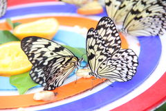 Butterfly park. Closeup of butterflies perched on a colorful background at a butterfly park in Singapore stock image