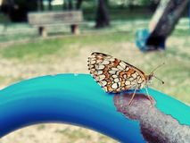 Butterfly in a park. Brown butterfly resting in a playground Stock Images