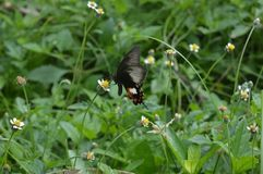 Butterfly in the park. Flower and bee in small park Stock Photography