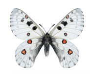 https://thumbs.dreamstime.com/t/butterfly-parnassius-actius-dubitabilisi-male-white-background-50357372.jpg