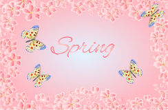 Butterfly parnassius and of sakura blossoms vector Royalty Free Stock Photo