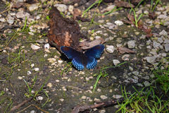 Butterfly path Royalty Free Stock Images