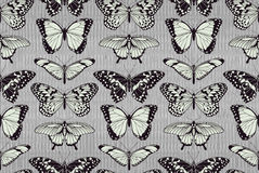 Butterfly pattern background Stock Image