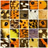 Butterfly pattern set Stock Image