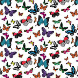 Butterfly pattern. On white background Royalty Free Stock Photos