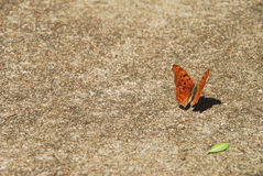 Butterfly on pavement 2 Royalty Free Stock Images