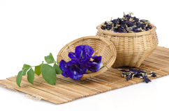 Butterfly pea, Asian pigeonwings dry and fresh (Clitoria ternatea L.). Royalty Free Stock Photos
