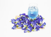 Butterfly Pea Stock Photos