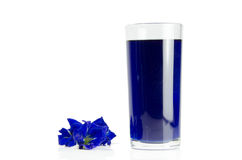 Butterfly pea. Blue butterfly pea and drink herbal royalty free stock images