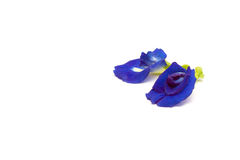 Butterfly Pea. Blue Butterfly Pea Flower isolated on white background Royalty Free Stock Photos