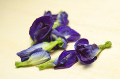 Butterfly pea or Blue pea flowers isolated on white background Royalty Free Stock Images