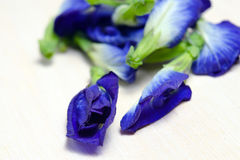Butterfly pea or Blue pea flowers isolated on white background Stock Photo