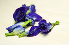Butterfly pea or Blue pea flowers isolated on wooden background Stock Photos