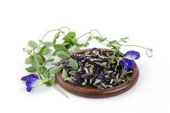 Butterfly Pea Blue Pea Mussel - Shell Creeper (Clitornia ternatea) Stock Photography