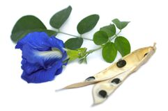 Free Butterfly Pea Clitoria Ternatea Flower And Dried Pod Royalty Free Stock Photography - 178923687