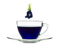 Butterfly pea in cup isolated on white background Stock Image