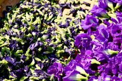 Butterfly Pea flower dries in basket for mix with hot water to drinking stock image