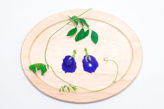 Butterfly Pea. Flower and leaf on wood discs isolated on white royalty free stock image