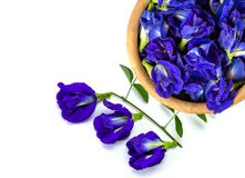 Free Butterfly Pea Flower Or Blue Pea Isolated On White , Stock Photography - 191620692