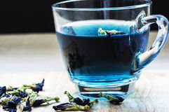Butterfly Pea Flower Tea royalty free stock photos