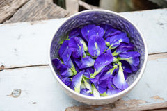Butterfly pea flowers Royalty Free Stock Photography