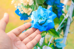Butterfly pea flowers with hands. Butterfly pea flowers with hands the elegant illustration general royalty free stock photos