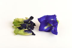 Butterfly Pea isolated on white background Royalty Free Stock Photography
