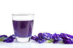Butterfly pea juice for drink on white . Stock Image