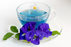 Butterfly pea Tea on White Background Royalty Free Stock Photography