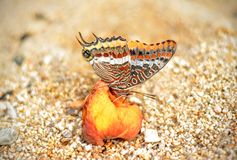 Butterfly and peach Royalty Free Stock Photography
