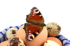 Butterfly peacock eye on the eggs royalty free stock photos