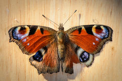 Butterfly (peacock eye) on wood in top view Stock Images