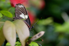 Butterfly Peaking Out Stock Photography