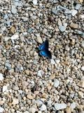 Butterfly on pebble rock stone royalty free stock image
