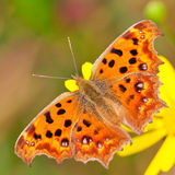 Butterfly perch on flower Stock Photos
