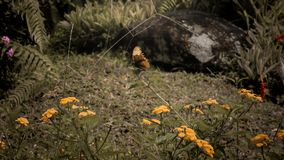 A Butterfly perch on flower stalks royalty free stock photos