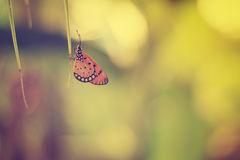 Butterfly perch leave of coconut tree Stock Photography