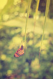 Butterfly perch leave of coconut tree Royalty Free Stock Photo