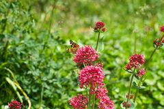 Butterfly perched on a bright red flower Stock Photo