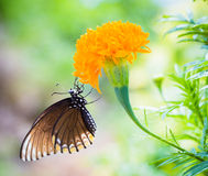 Butterfly perched on a flower stock photography