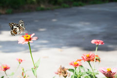 Butterfly perched on a flower in the morning sun. Butterfly perched on a flower in the morning sun Stock Images