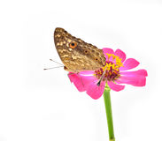 Butterfly perched Stock Image
