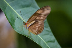 Butterfly. A butterfly perched on a green leaf with blurred background royalty free stock photos