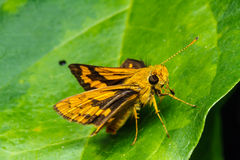 Butterfly perched on a green leaf. Stock Image