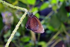 Butterfly Perched on Green Vine Royalty Free Stock Images