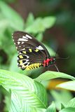 Butterfly perched on leaf Stock Images
